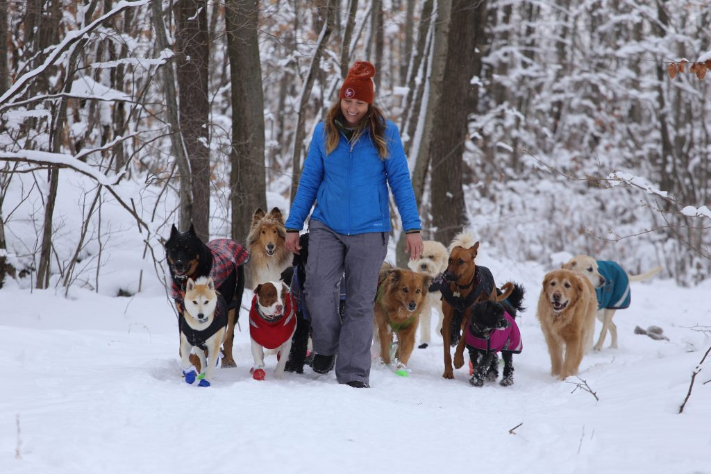 Sara leading her pack out at Dog Camp